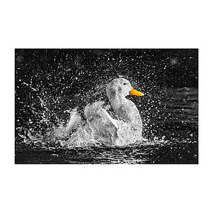 Pekin Duck Print - 100 limited edition art prints
