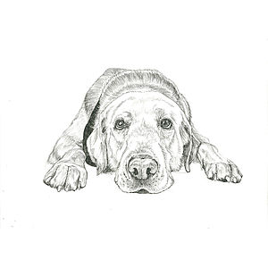 Bespoke Pet Portrait A4 - canvas prints & art
