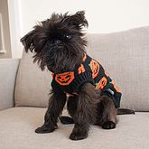 Halloween Pumpkin Knitted Dog Jumper - pets
