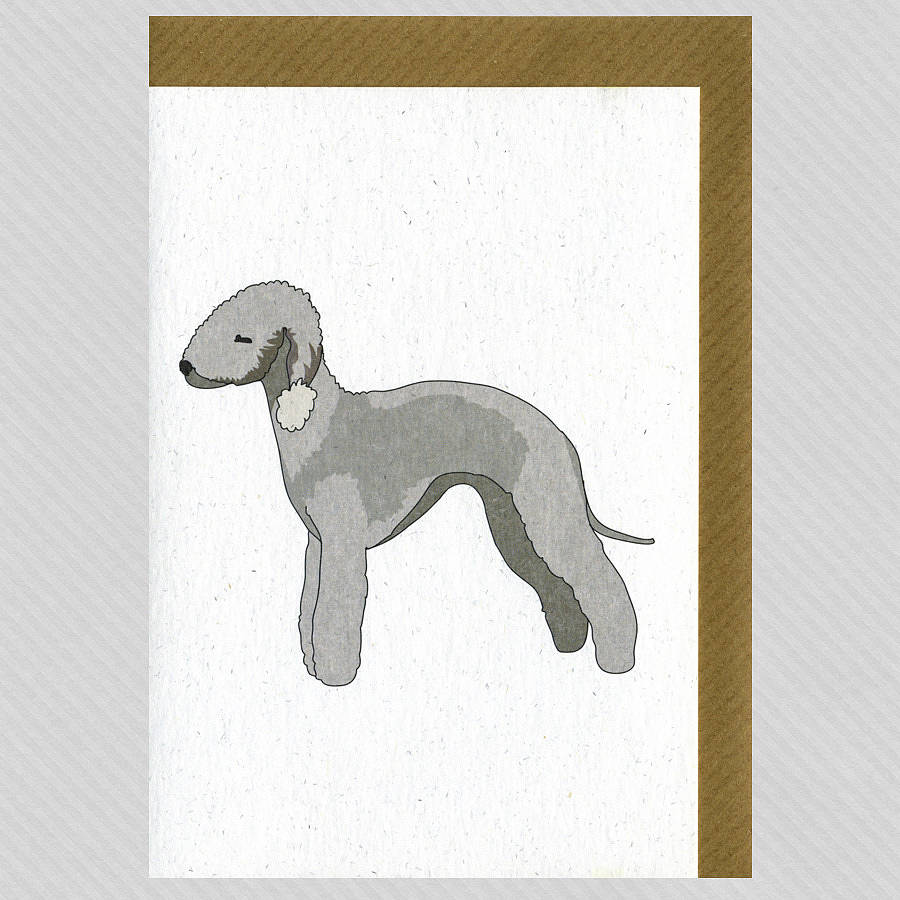 Illustrated Bedlington Blank Card