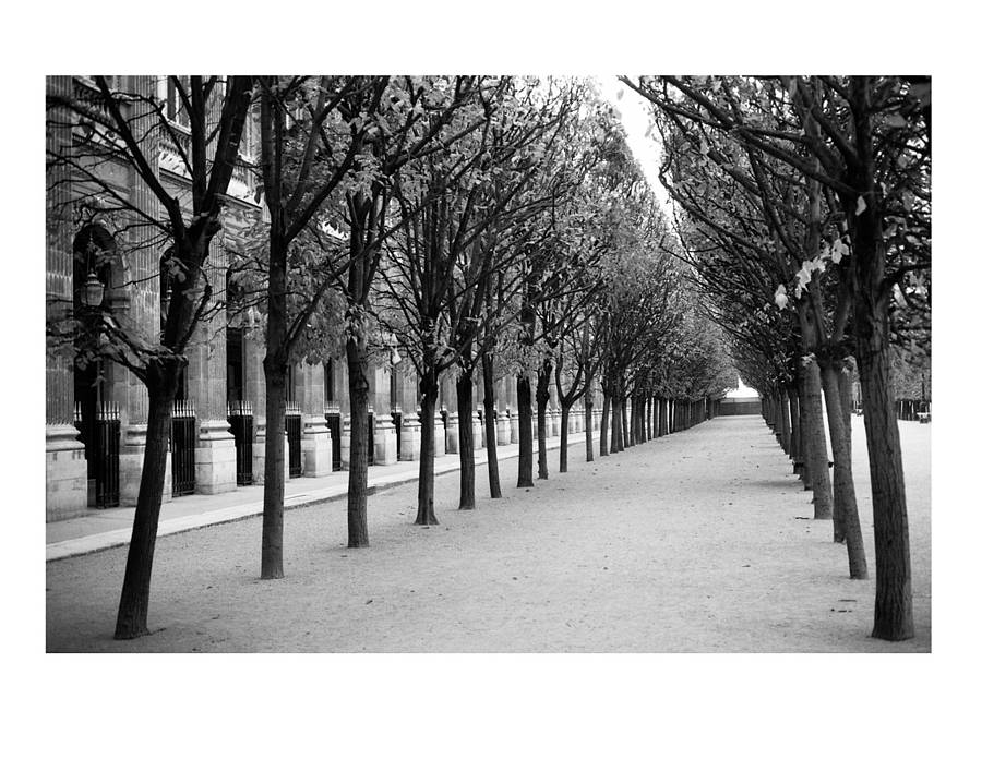 Treeline paris black and white art print