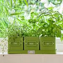 Kitchen Herb Pots in Lime Green