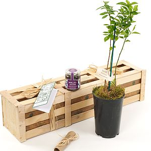 Take It Sloe Gift Crate - flowers & plants