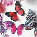 3 D Butterfly Heart Display