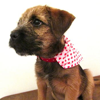 Dog Heart Neckerchief Bandana