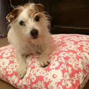 Taupe Daisy Dog Beds - beds & sleeping