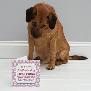 Personalised 'From Your Pet' Card