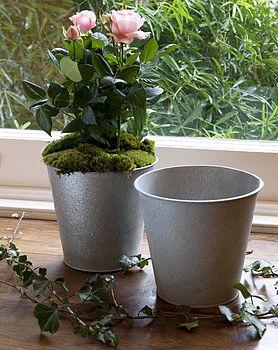 Large Zinc Flower Pot