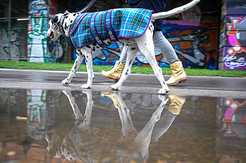 The Laxey Manx Tartan Dog Coat