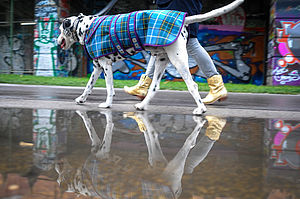 The Laxey Manx Tartan Dog Coat - dogs