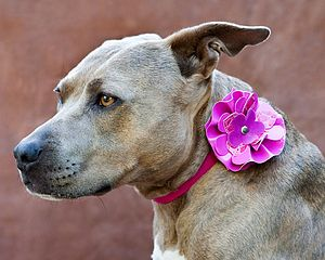 Floral Dog Collar - dogs