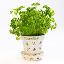 Herb Pot with Parsley