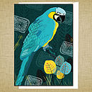 Macaw Greetings Card