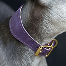 Whippet Collar Proper Purple