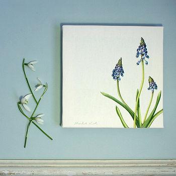 ' Grape Hyacinth ' Botanical Canvas Print