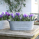 Oval Metal Garden Planter