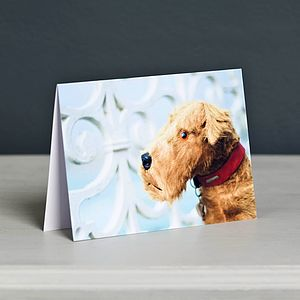 'Spangles' Vintage Dog Toy Greeting Card