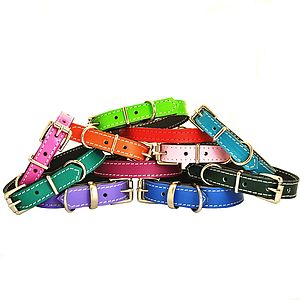 Soft Leather Small Dog Collar - walking