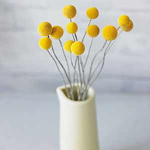 Billy Button Dried Flowers - on trend: yellow & grey