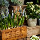Artificial Grape Hyacinth In Wooden Planter