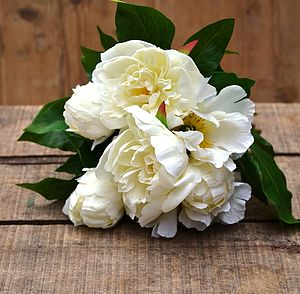 Silk Peony Bundle - flowers & plants