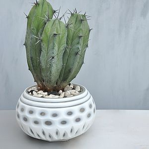 Cami Cameo Bowl - table decorations
