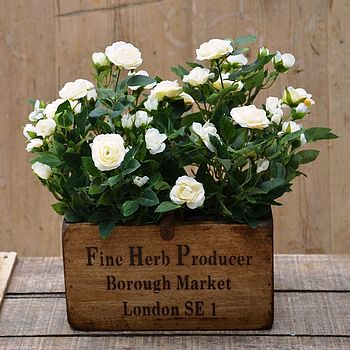 Silk Spray Rose Plants In Wooden Planter