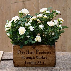 Silk Spray Rose Plants In Wooden Planter - flowers & plants