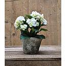 Silk Potted Hydrangea Plant