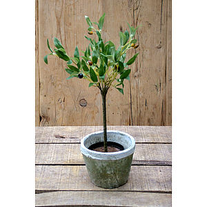 Artificial Mini Olive Tree In Pot - flowers