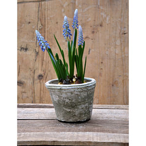 Artificial Grape Hyacinth Plant In Pot - flowers & plants