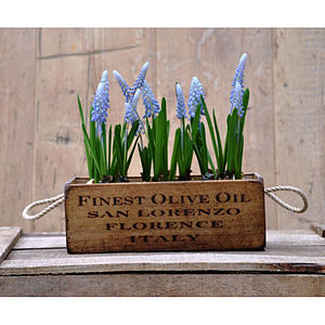 Artificial Grape Hyacinth In Wooden Planter - room decorations