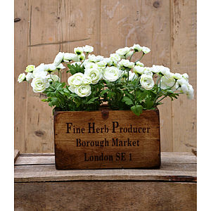 Silk Ranunculus Plants In Wooden Planter