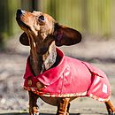 Red Dachshund Coat Orange Floral Trim