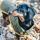 Green Dachshund Coat, Green Trim