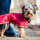 Red Popper Fronted Dartmoor Waterproof Dog Coat