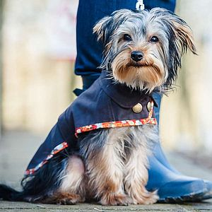 Toy And Small Dog Waterproof Coat - dogs