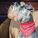 Dog Neckerchief Red Gingham/Red Spot