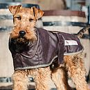 Terrier Waterproof Dog Coat