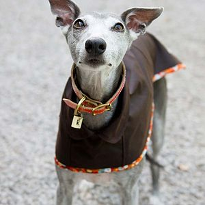 Whippet Waterproof Dog Coat - clothes