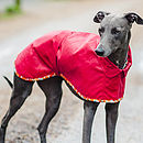 Bright Red Whippet Coat Standard Collar