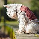 Saffron/Oatmeal Double Tweed Gloucester Dog Jumper