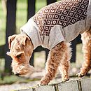 Brown/Oatmeal Diamond Gloucester Dog Jumper