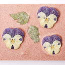 natural freeze-dried raspberry powder, finished with Devon's finest whole crystallised violet flowers