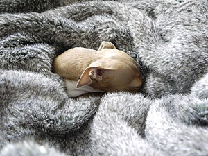 Squirrel Faux Fur Pet Blanket - gifts for your pet