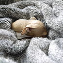 Squirrel Faux Fur Pet Blanket