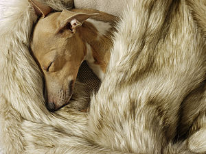 Faux Fur Blanket In Oatmeal - beds & sleeping