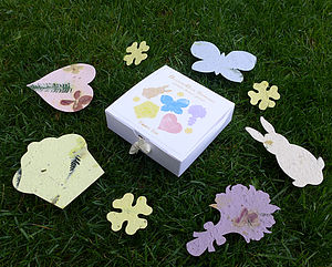 Spring Bloom Box - gardening