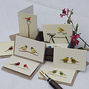 Boxed Collection Of Garden Bird Gift Cards