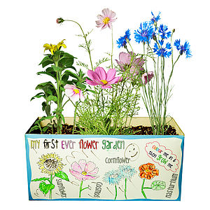 Grow My First Ever Flower Or Veg Garden - gifts for babies & children